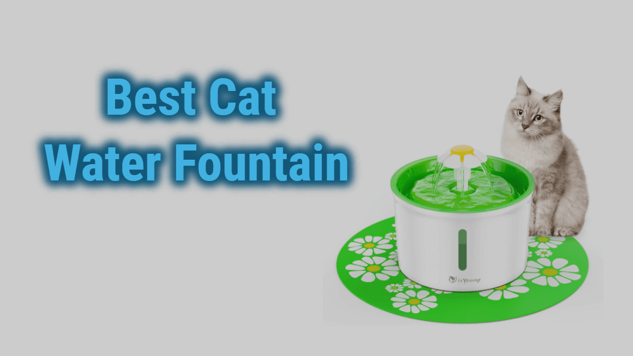 The 7 Best Cat Water Fountains of 2021 | Reviews